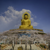 The Colossal Buddha