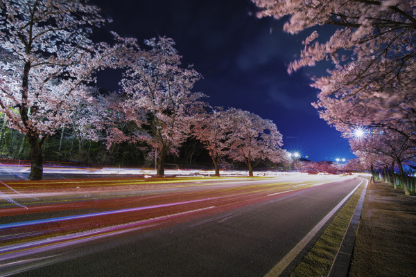 Bomun Blossom-11