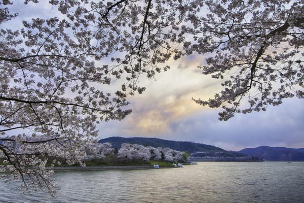 Bomun Blossom-3