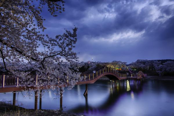 Bomun Blossom-6