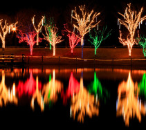 Ulsan Grand Park Christmas Lights