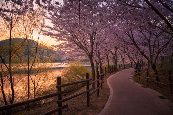 Seongnam Lake Park in Ulsan makes for a great place to enjoy the spring.