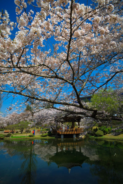 This is a popular place for people to enjoy this time of year in Gyeongju